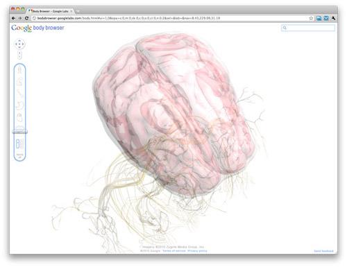 Анатомический театр Google Body Browser. Человеческий организм в 3D