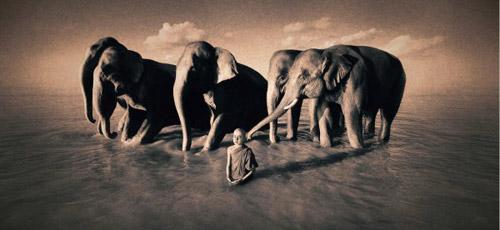 «Пепел и снег» Грегори Кольбера. Фотопроект о единстве мира животных и мира людей