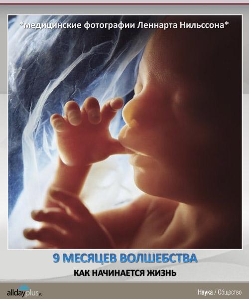 Как начинается жизнь - 9 месяцев волшебства. Медицинские фотографии Леннарта Нильссона