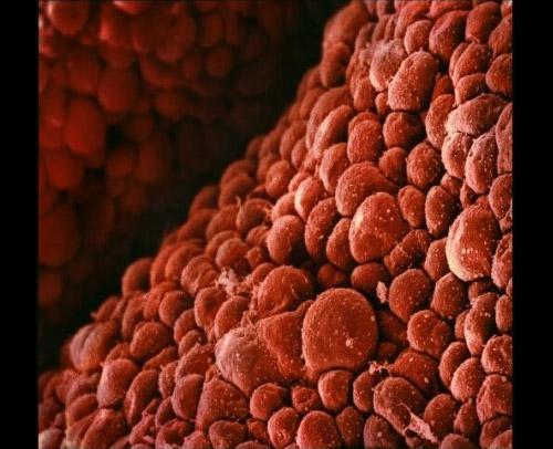 эмбрион 1 см фото