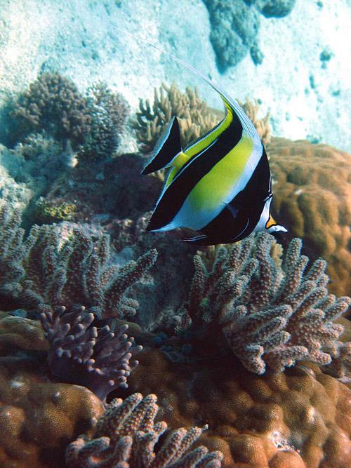 7 новых чудес природы. Результаты конкурса фонда «New7Wonders»