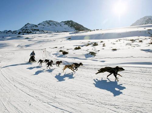 Гонки на собачьих упряжках. Зимний фотоотчет