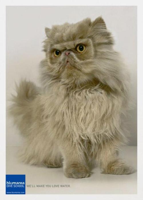 Кошачий креатив. Любимые питомцы в рекламе