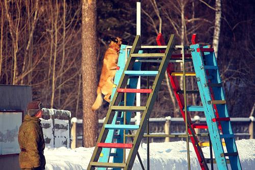 Как собаки служат в армии. Фоторепортаж Дарьи Каракуловой